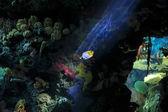 Peixes tropicais e corais — Fotografia Stock