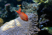 Sea red fish — Foto Stock