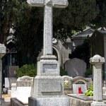 Cemetery cat — Stock Photo #48932901