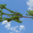 Trees against the sky. — Stock Photo