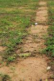 Grass and pavement. — Stock Photo
