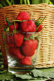 Strawberry fruit berries — Stock Photo