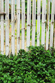 Bamboo fence - green tree. — 图库照片
