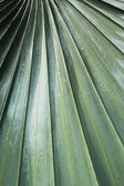 Leaf blade green stripes. — Stock fotografie
