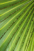 Leaf blade green stripes. — Foto Stock