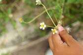 White flowers - in the hands of children. — Stock Photo