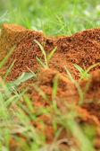 Ants nest — Stock Photo