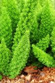 Fern - green leaves. — Stock Photo