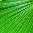 Palm leaves. — Stock Photo