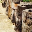 Stump - placing row. — Stock Photo #35775873