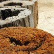 Stump - placing row. — Stock Photo #35775971