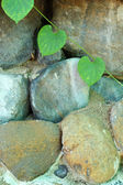 Green leaves on a stone wall. — Stock Photo