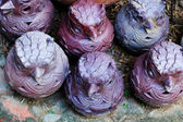 Sochařství - keramika - sovy. — Stock fotografie
