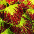 Green and red leaves. — Stock Photo #35797665