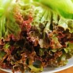 Green leaf lettuce. — Stock Photo