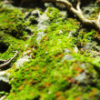 The green moss. — Stock Photo