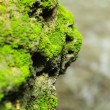 Stock Photo: The green moss.