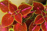Green and red leaves — Stock Photo