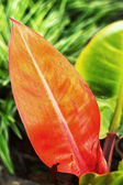 Red leaves. — Stock Photo