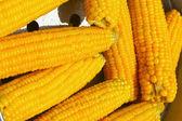 Färsk majs på marknaden — Stockfoto