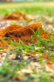 Ants nest with green grass. — Stock Photo