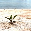 Green trees new birth on the land that the sand. — Stock Photo
