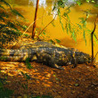 A large crocodile - lying on the ground. — Stock Photo
