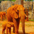 Elephant. Mother with Baby Elephants Walking Outdoors. — Stock Photo #36222319