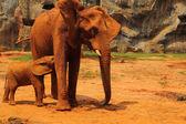大象。母亲与婴儿大象到户外散步. — 图库照片