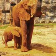 Elephant. Mother with Baby Elephants Walking Outdoors. — Stock Photo #36244977