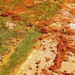 Постер, плакат: Contaminated soil the wheel tracks on the road