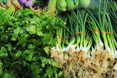Fresh vegetables - green onion and coriander in the market. — Stock Photo