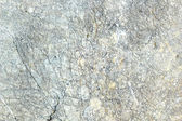 Gray and white marble texture background — Stock Photo