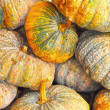 Fresh green pumpkin in the market — Stock Photo