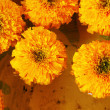 Marigold flower in the market — Stock Photo