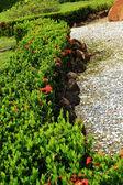 Ιαπωνικοί κήποι zen στη φύση — Φωτογραφία Αρχείου