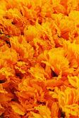 Kwiat nagietka na rynku — Zdjęcie stockowe