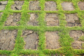 Green grass and stones in nature — Stock Photo