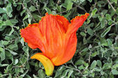Orange flower in the nature — Stock Photo