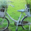 Potted plants on old bicycles vintage style. — Stock Photo