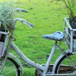 Potted plants on old bicycles vintage style. — Stock Photo #36723989