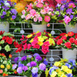 Beautiful of artificial flowers on the shelves. — Stock Photo