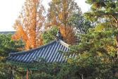 Beautiful landscape at South Korea — Stock Photo
