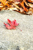 Mable leaf red on the road. — Stock Photo