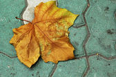 Ginkgo leaves change color autumn in Korea. — Stock Photo