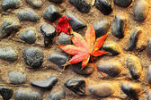 Red maple leaves on a stone floor. — Stock Photo