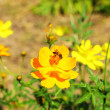 Stock Photo: Yellow flower with bee in garden.