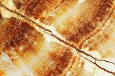 Marmor brun bakgrund konsistens — Stockfoto