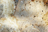 Marble brown background texture - detail — Stockfoto