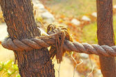 Old rope tied to a tree — Stock Photo